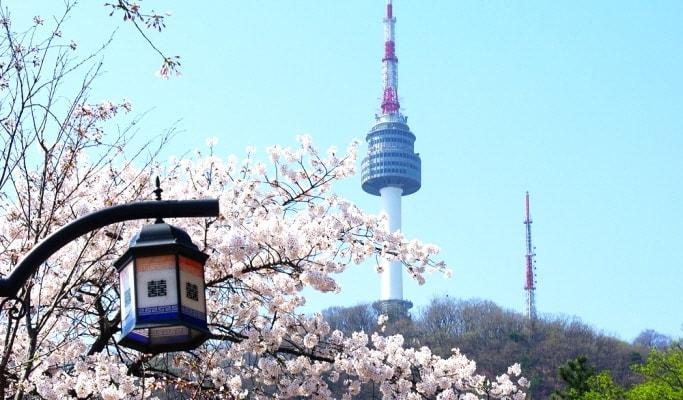 n-seoul-tower-spring